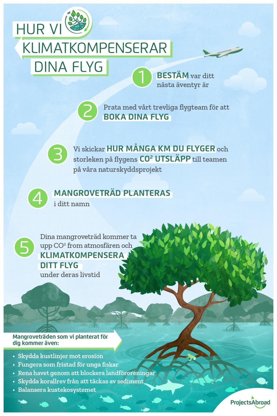 Steg för steg hur vi klimatkompenserar våra resenärers flyg genom att plantera mangroveträd.